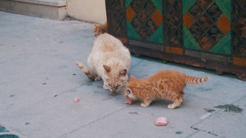Homeless Red Cat with a Kitten on the Street Eating Food. Stray cats eating a piece of sausage on the street.