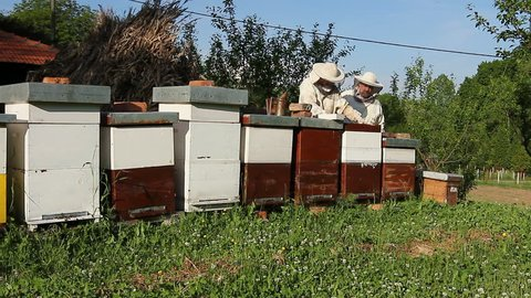 Two beekeepers are on spring checking of all details in their apiary.