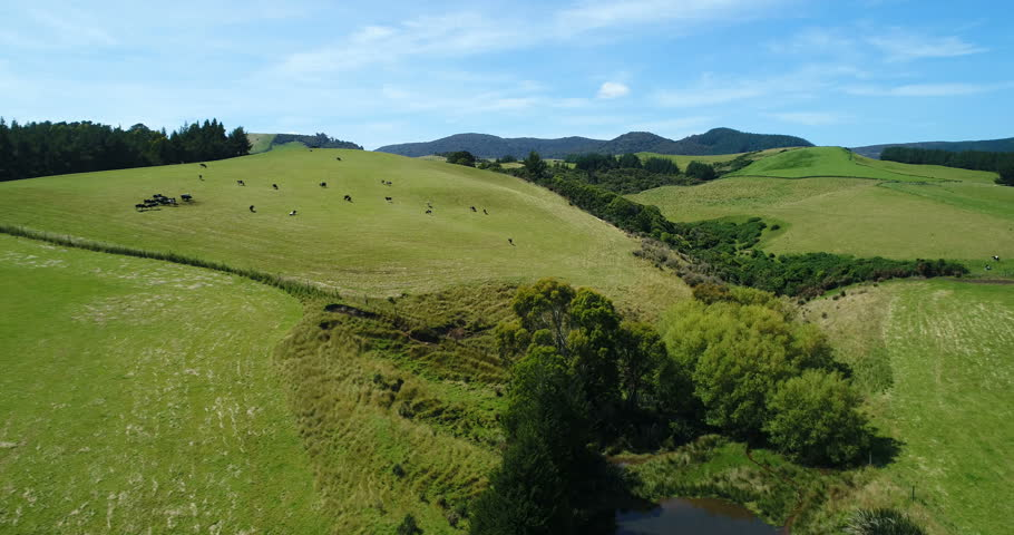 Idyllic countryside farmland nature landscape with hills with cows on grass on south island of New Zealand. Aerial drone footage video.