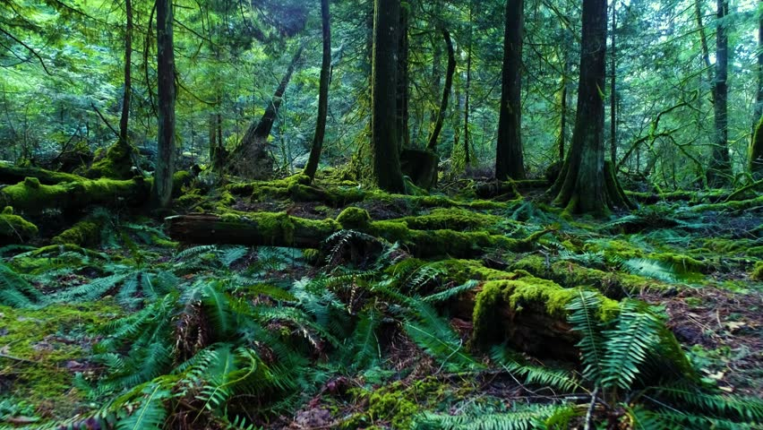 Canada Moss and Fern Covered Forest Floor | Shutterstock HD Video #27918739