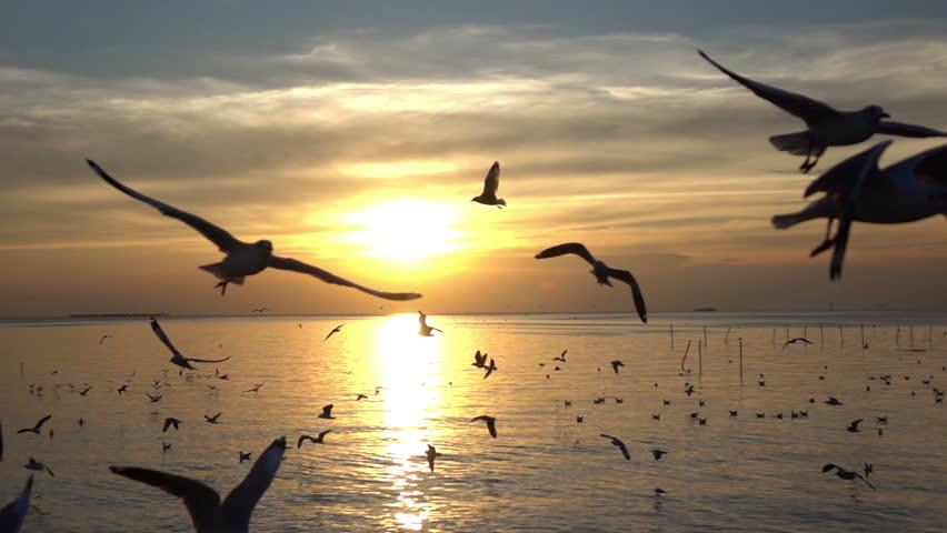 Bird flying on blue sky in sunset, slow motion shot.