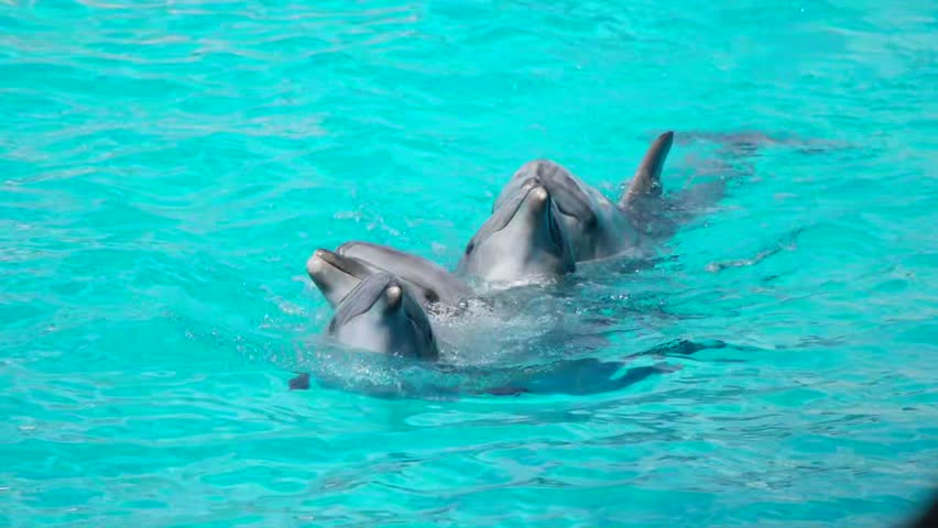 Dolphin is dancing in the water | Shutterstock HD Video #28107937