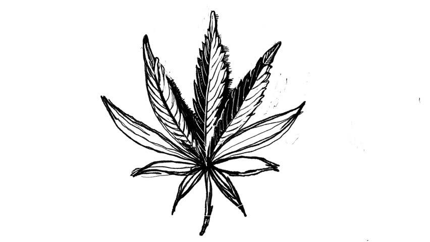 Как нарисовать коноплю ручкой скачать бесплатно картинки марихуаны