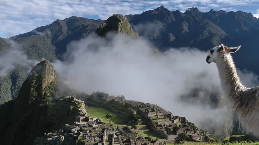 Machu Picchu ancient city of the inca with lama, near Cuzco, andes mountains, South America
