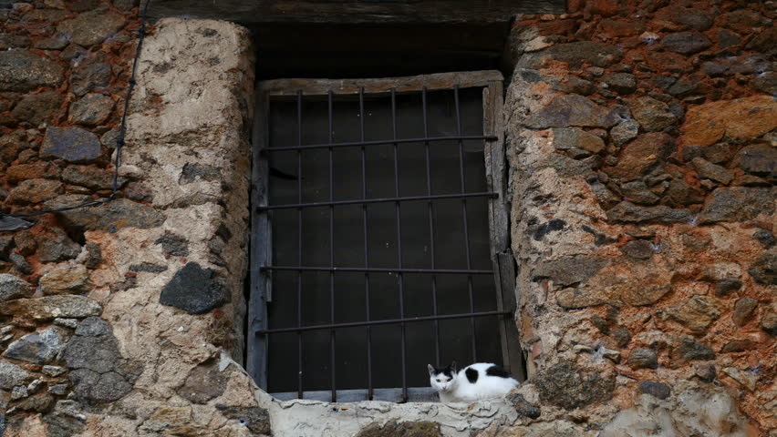 A cat on a window of a village house, filmed in Avila, Castilla y Leon, Spain, in June 2015. | Shutterstock HD Video #28246042