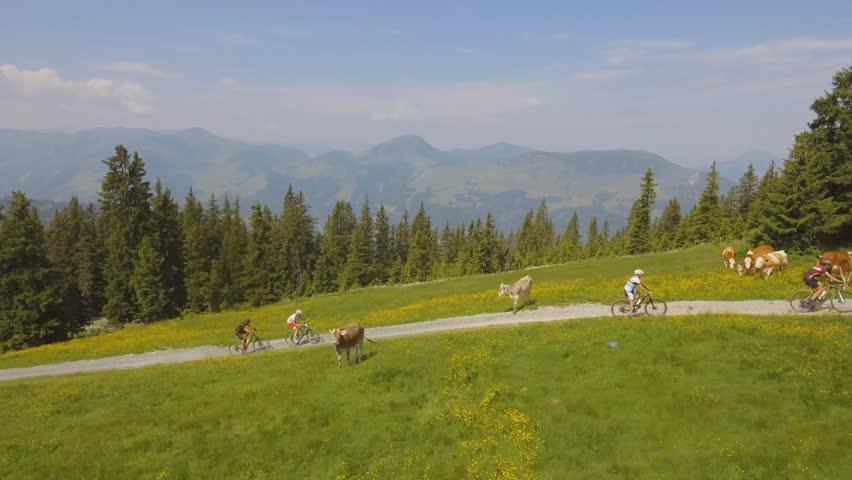 Kitzalps - Biking between the cows - Aerial Kitzbuehel #28278589