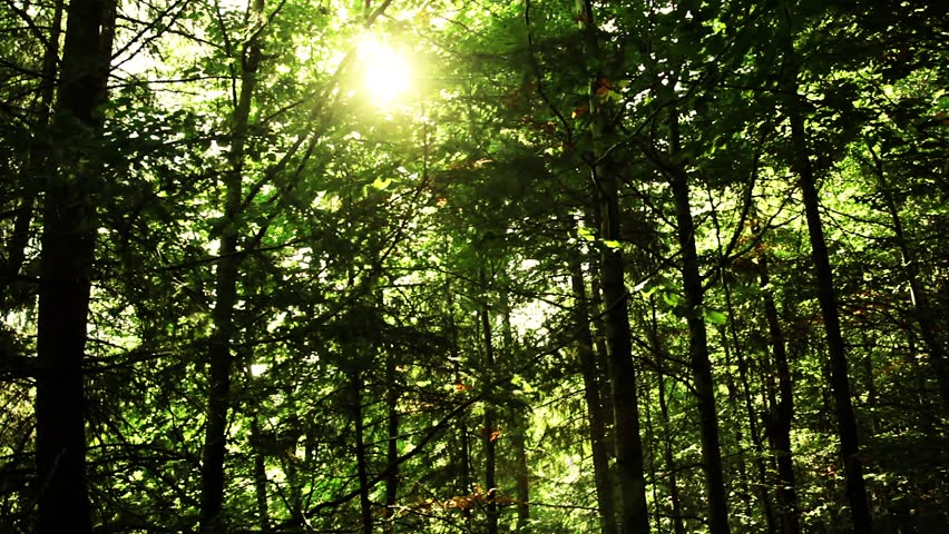 Sun in the forest and a real lens flare | Shutterstock HD Video #2831194
