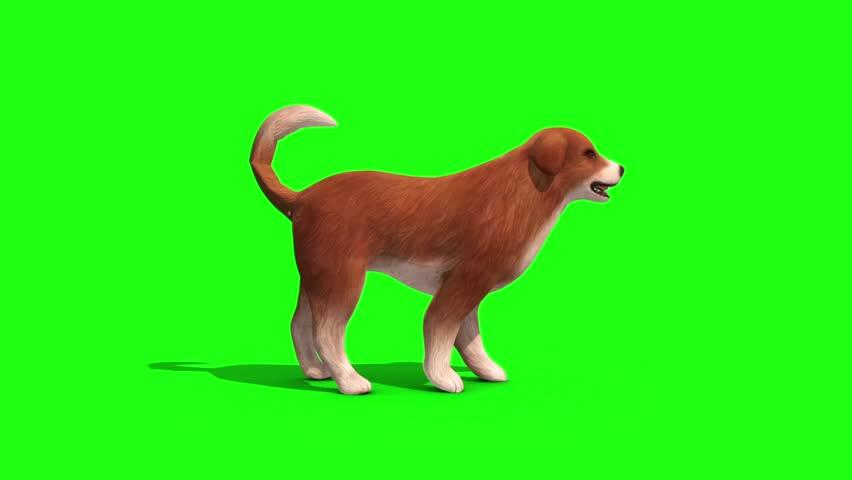 Brown Big Dog Bark Side Green Screen 3D Rendering Animation