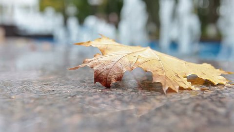 Yellow leaf falling on marble edge of fountain and moving under wind