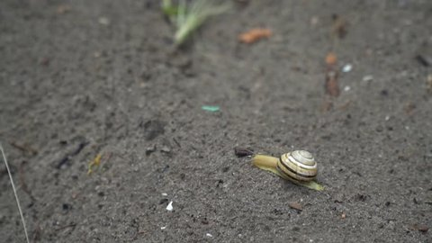 A small snail in the sand