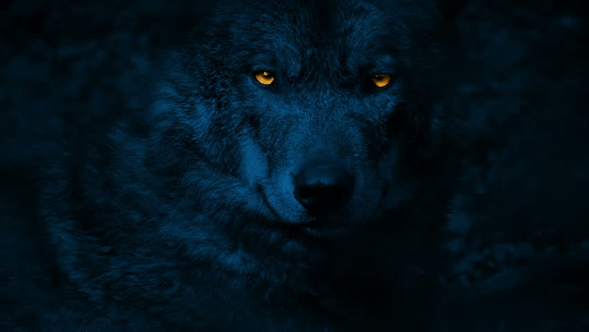 Wolf Growls With Glowing Eyes At Night. With sound