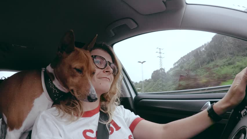 Funny action camera wide angle shot of female driver in glasses and her furry dog friend embarking on adventure, basenji puppy is resting on girls shoulder almost falling asleep from riding   Shutterstock HD Video #28567195