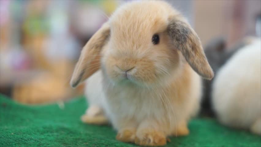 Rabbit looking camera in store, | Shutterstock HD Video #28567645