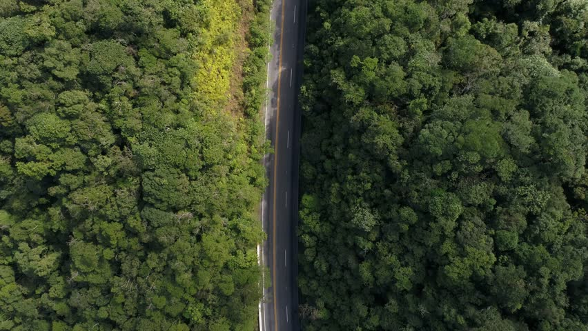 Top View of a Road in the middle of the forest