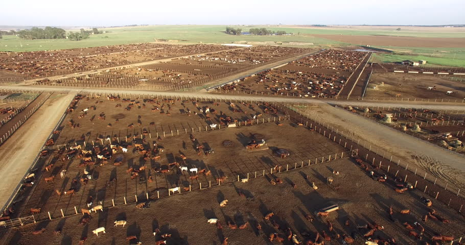 Aerial view of a cattle feedlot | Shutterstock HD Video #28856485