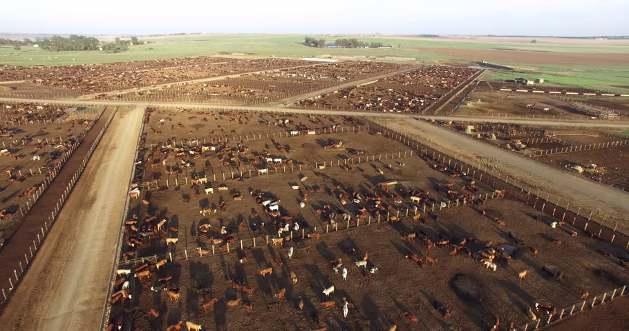 Aerial view of a cattle feedlot. Livestock are responsible for about 14.5 percent of global greenhouse gas emissions and are a major contributor to climate change.