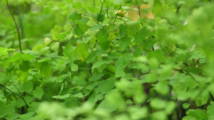Green bush close up. Abstract nature background. Green leafs | Shutterstock HD Video #28908976