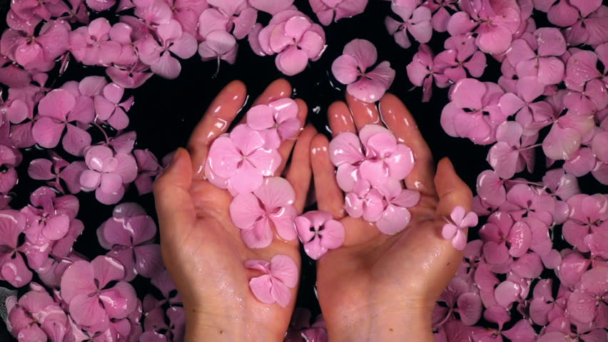 Woman enjoying hands care bath with hydrangea flowers. Slow motion. Beautiful lifestyle composition with top view. Shooting with high-speed camera.