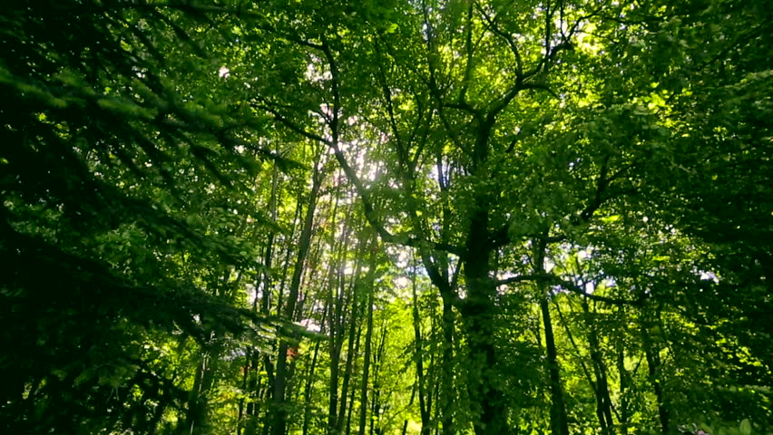 Sun's rays are shining through the leaves of the trees in the forest. The camera moves down the hill | Shutterstock HD Video #29013454