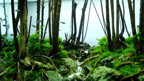Aquascape Forest Style Stock Footage Video 100 Royalty Free 29105296 Shutterstock
