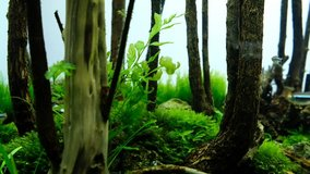 Free Aquascaping Stock Video Footage Download 4k Hd Clips