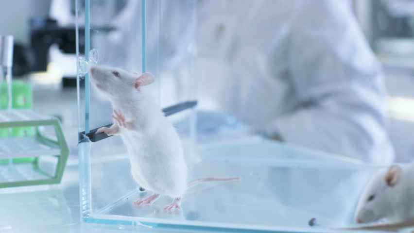 Medical Research Scientist Examines Laboratory Mice and Looks on Tissue Samples under Microscope. She Works in a Light Laboratory. Shot on RED EPIC-W 8K Helium Cinema Camera.