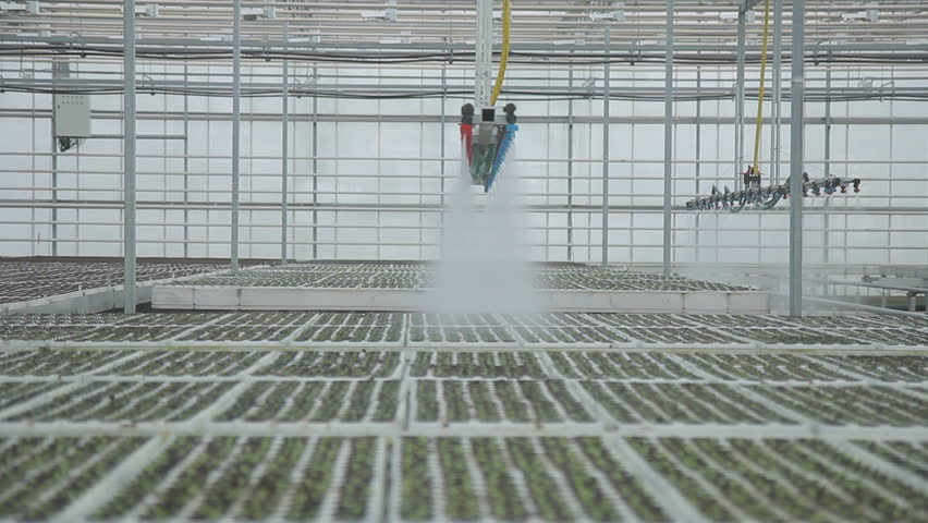 Industrial greenhouses large in size using top automatic watering indoors. equipment system moves slowly, floods plantation, Consists of long rows pipes droppers. Trumpet laid along rows of planted