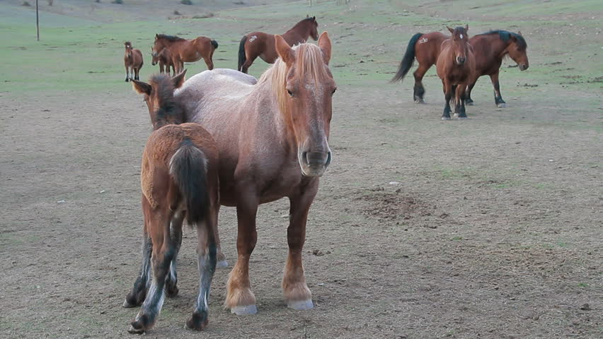 Horses five | Shutterstock HD Video #2925715