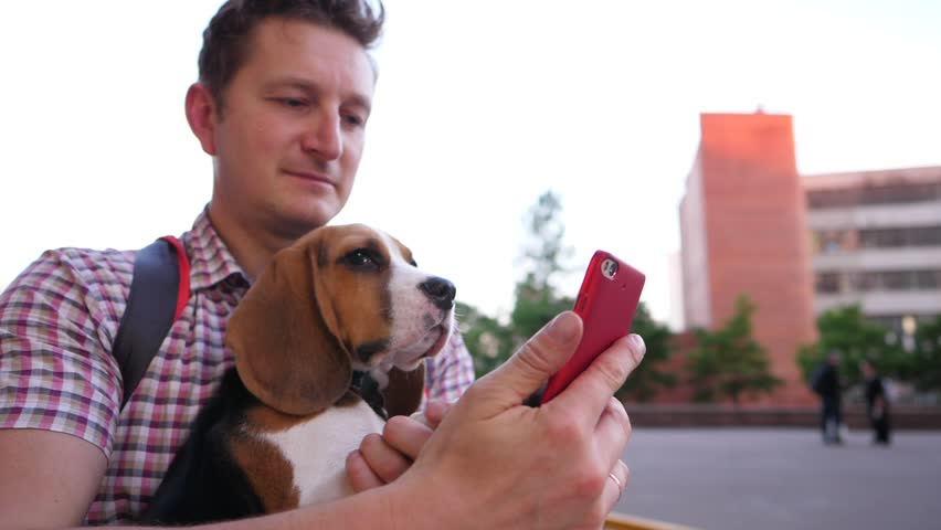 Man with young dog sit with smartphone, use paw to swipe touchscreen. Small Beagle with thoughtful muzzle look overhead phone. Funny scene, curious owner try to recreate pensive puppy