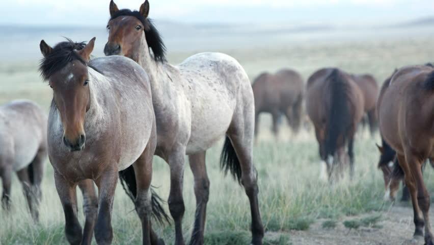 Up close view of wild horses grazing in the Utah desert. | Shutterstock HD Video #29374813