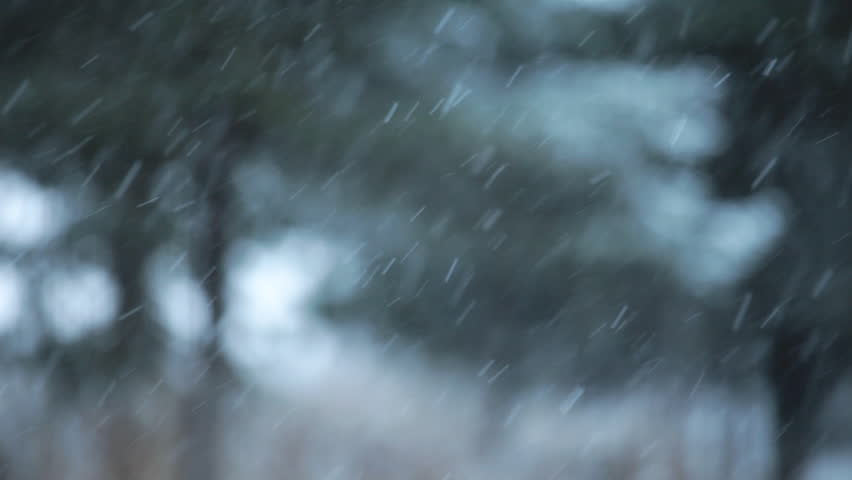 Snow falling with an intentionally blurry background of spruce trees for a dreamy winter look.   Shutterstock HD Video #2952343