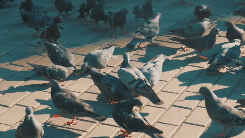 Feeding flock of pigeons on boulevard | Shutterstock HD Video #29623360