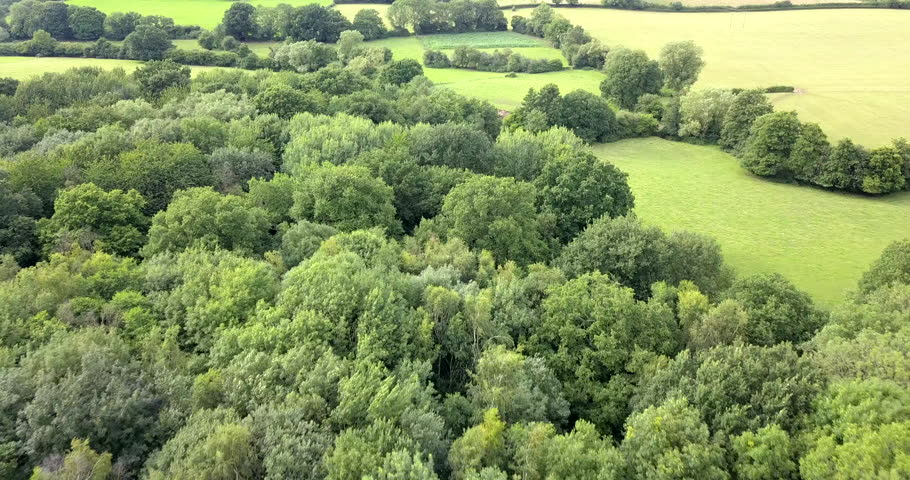 4K aerial drone footage flyover deciduous forest