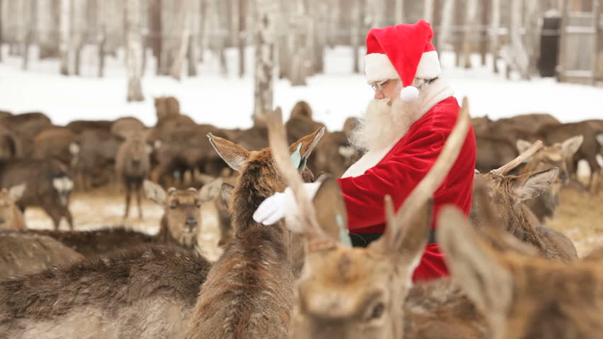 Santa Claus feeding deer on a deer farm