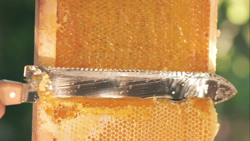 A close-up of a knife opens a honeycomb with honey on a frame made of beehive. Honey production technology and manual work in the apiary