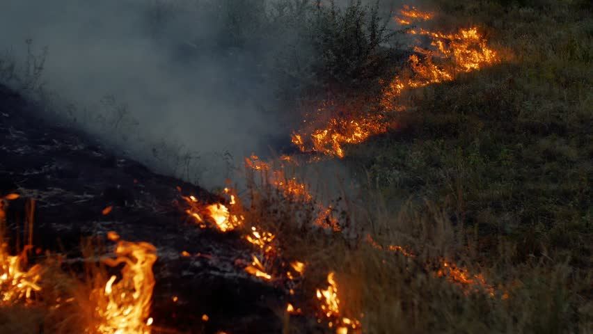 Wildfire Flames and Smoke in Nature | Shutterstock HD Video #29849677