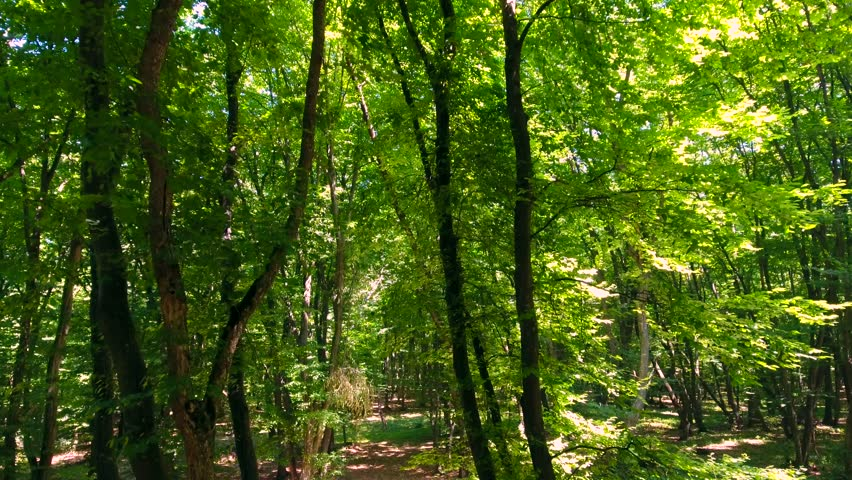 Aerial, climbing trees, deep green forest, vibrant foliage, light and shadows | Shutterstock HD Video #29967805