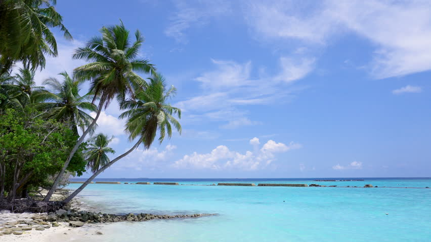 Tropical pristine beach with coconut palm and turquoise water, Maldives travel destination   Shutterstock HD Video #29987278