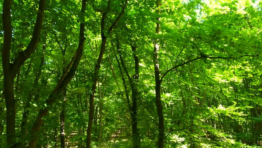 Aerial, 4k, Perfect forest, multiple perspectives, trees, foliage, vibrant green nature | Shutterstock HD Video #29998993