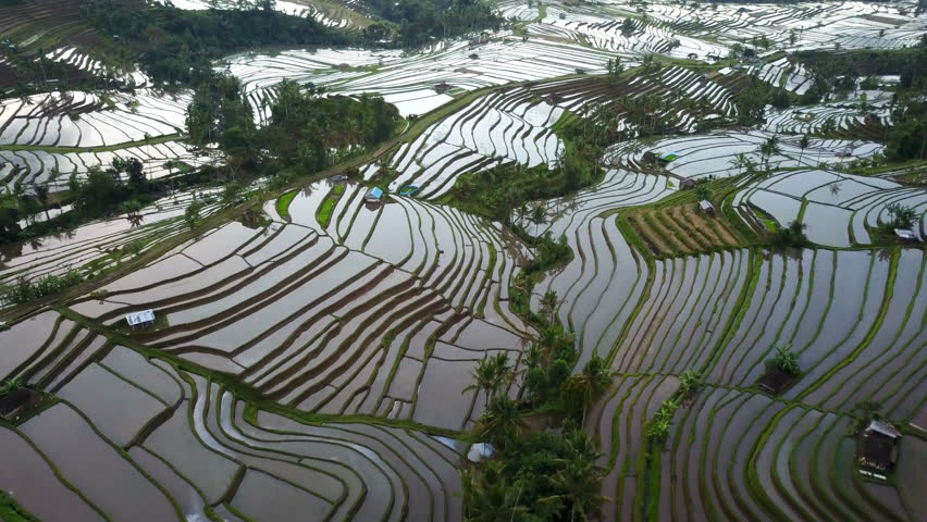 Aerial video in an amazing landscape rice field on Jatiluwih Rice Terraces, Bali, Indonesia, with a drone, above rice terraces in a beautiful day rice field. 4K footage.