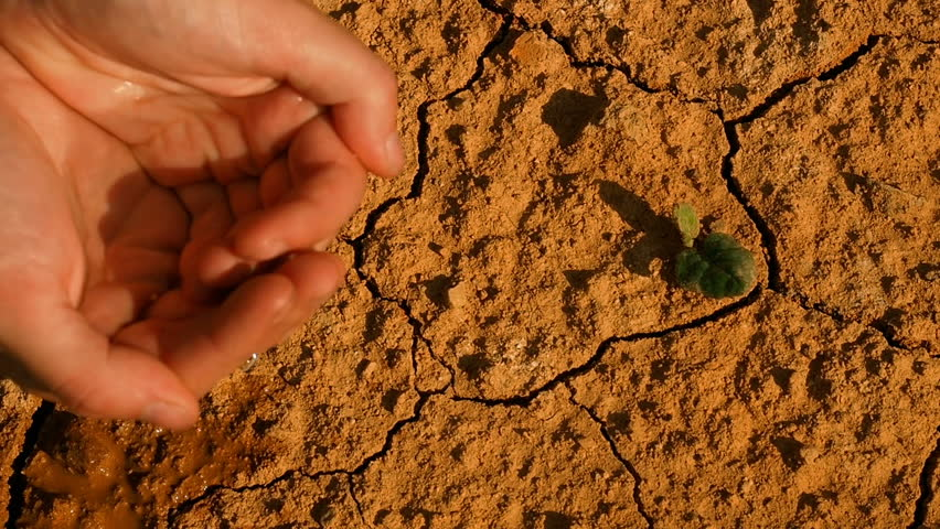 Extreme Heat Drought Lack Of Water Drying Plant Desert. Drought Anticyclone Global Warming. Plants And Nature Dying, spring season. Weather Phenomenon Extreme Heat And Drought. Level of fresh water.