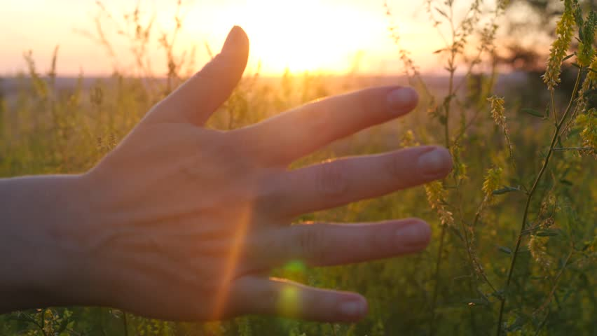 Hand of a young woman enjoying the nature of the Fields Flowers at sunset or at sunrise.   Shutterstock HD Video #30047218