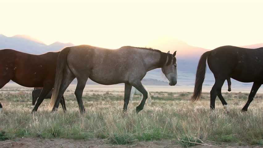 Horses grazing along the Pony Express route while the sun rises. | Shutterstock HD Video #30102535