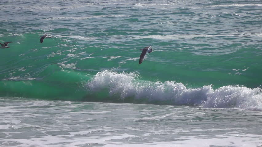 A Flock of Seagull Birds Fly Above Ocean Waves Crashing Onto the Beach in California. Beautiful and Dramatic Surf Filmed in High Definition Slow Motion Video.   Shutterstock HD Video #30140563