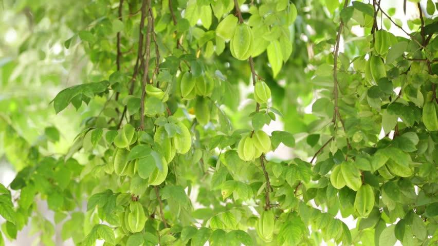 Starfruit  | Shutterstock HD Video #30199372