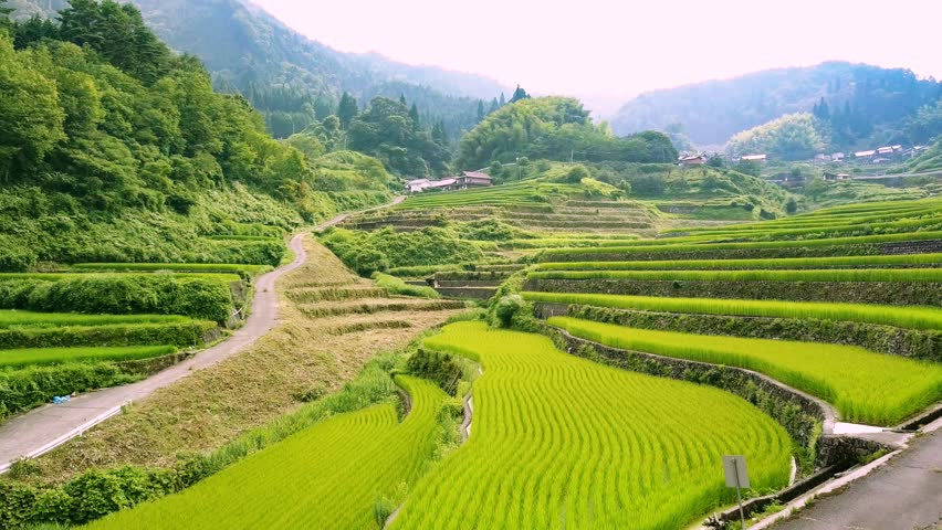 Aerial  movie with rice terraces | Shutterstock HD Video #30207262