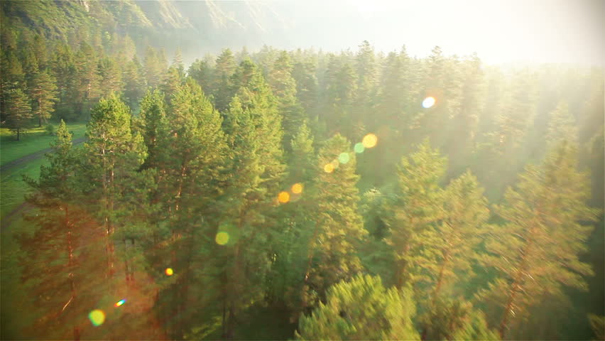 Aerial View. Flying over the beautiful sunny forest trees. Aerial camera shot. Landscape panorama. Altai, Siberia. | Shutterstock HD Video #3021262