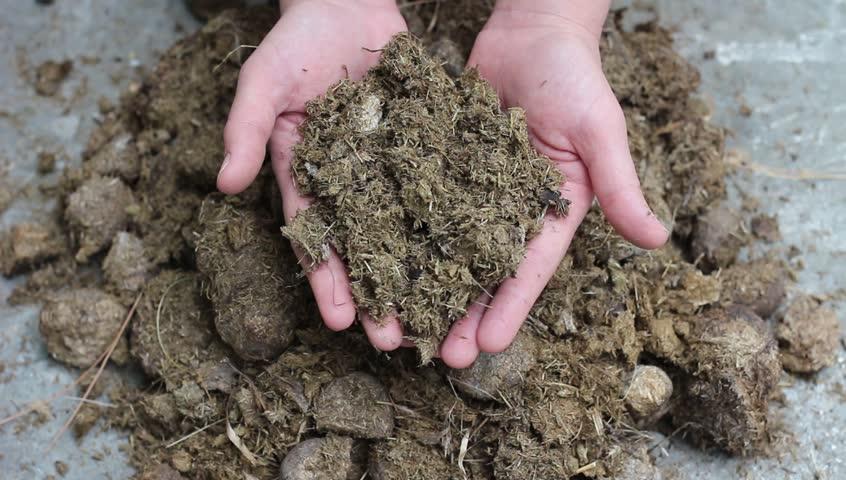 dung fertilizer