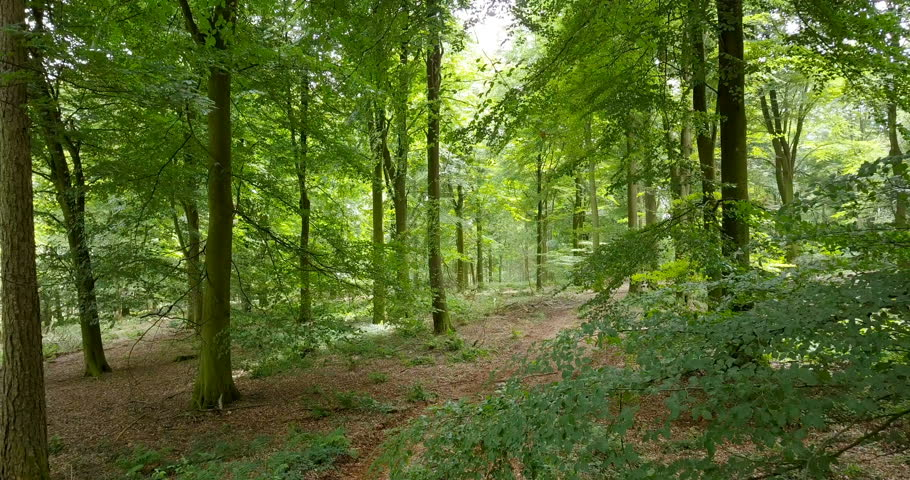 Slowly panning through a forest at dawn in the summer | Shutterstock HD Video #30409084