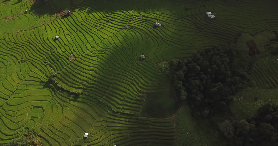 Top view of the rice paddy fields in northern Thailand | Shutterstock HD Video #30466951